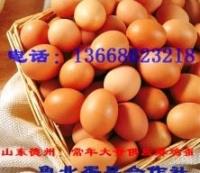 鸡蛋/鲁北蛋品合作社常年大量供应鲜鸡蛋
